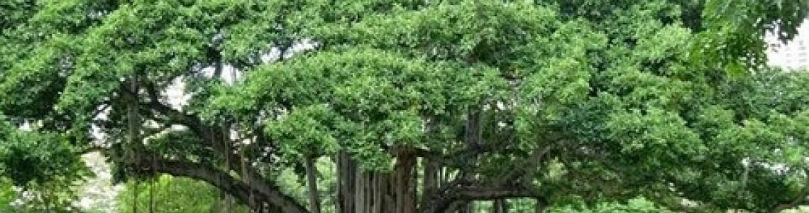 """"""" Roots matter """""""